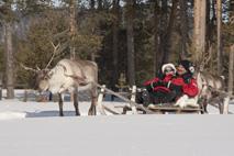 Afbeeldingsresultaat voor kerst in ivalo