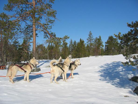 Afbeeldingsresultaat voor arctic action calling