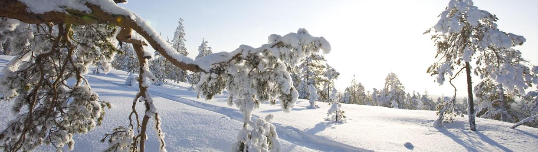 Afbeeldingsresultaat voor winteravontuur in levi